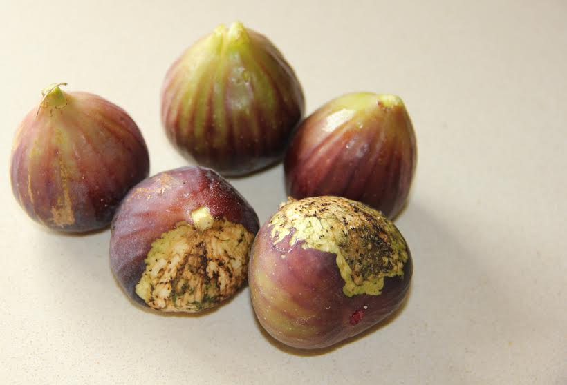 Yum! Figs are worth fighting for